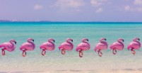 bermuda_flamingos_final_1-580x300