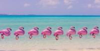 bermuda_flamingos_final_1-580x300